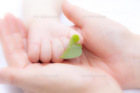 葉を持つ赤ちゃんの手と母親の手の素材 [FYI01016511]