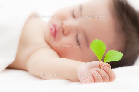 葉を持つ赤ちゃんの素材 [FYI01016522]