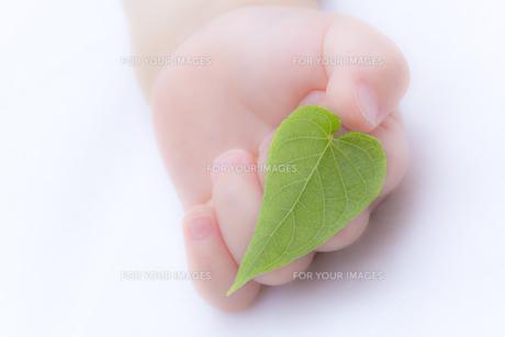 葉を持つ赤ちゃんの手の素材 [FYI01016542]