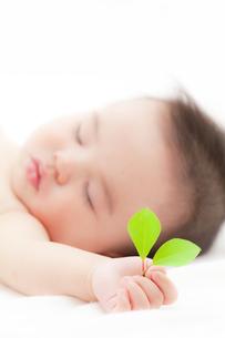 葉を持つ赤ちゃんの素材 [FYI01016543]
