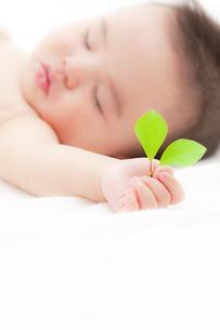 葉を持つ赤ちゃんの素材 [FYI01016564]