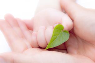 葉を持つ赤ちゃんの手と母親の手の素材 [FYI01016584]