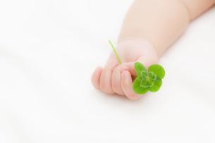 四葉のクローバーを持つ赤ちゃんの手の素材 [FYI01016585]