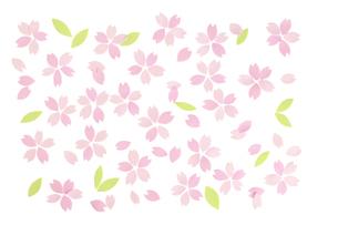 桜の花びらの春イメージの素材 [FYI01016637]