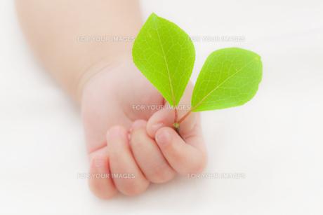 葉を持つ赤ちゃんの手の素材 [FYI01016640]