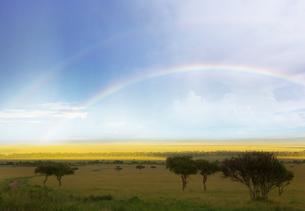 雨上がりのマサイマラ国立公園に掛かる二本の虹の素材 [FYI01017560]