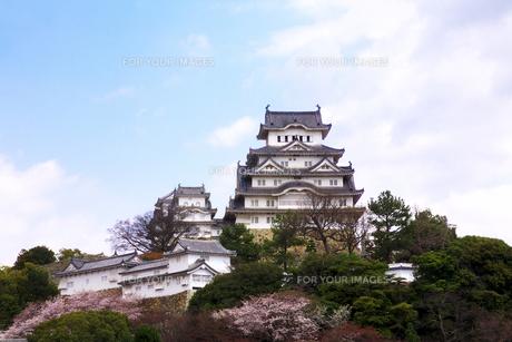 姫路城と桜の素材 [FYI01017563]