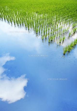 水田に映る空の素材 [FYI01017609]