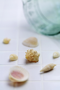 貝の夏イメージの素材 [FYI01018138]