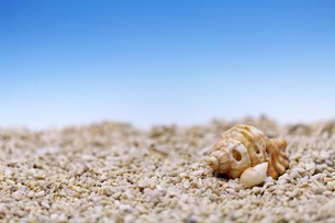 貝の夏イメージの素材 [FYI01018153]