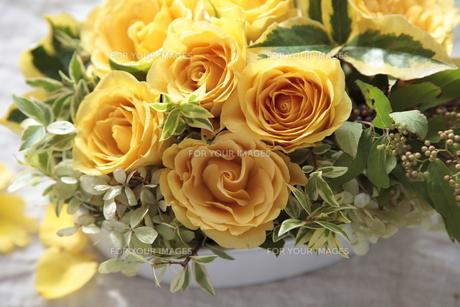 黄色いバラのアレンジの素材 [FYI01019158]