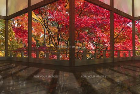 秋の和風建物の渡り廊下の素材 [FYI01021308]