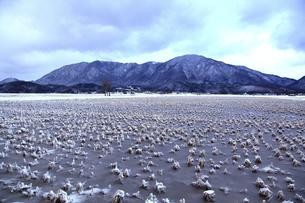 冬の田園風景と雪の弥彦山の素材 [FYI01023888]