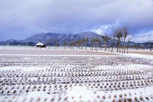 冬の田園風景とハサ木並木と弥彦山の素材 [FYI01023985]