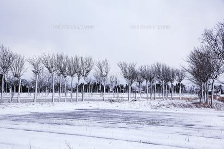 冬の田園風景とハサ木並木の素材 [FYI01024047]