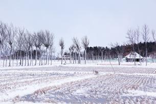 冬の田園風景とハサ木並木の素材 [FYI01024123]