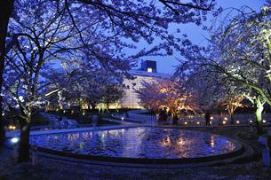 夕景の新潟市民芸術文化会館と桜の素材 [FYI01024521]