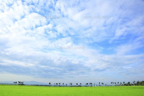 青々とした初夏の田園風景 Fyi01025668 ロイヤリティフリー素材