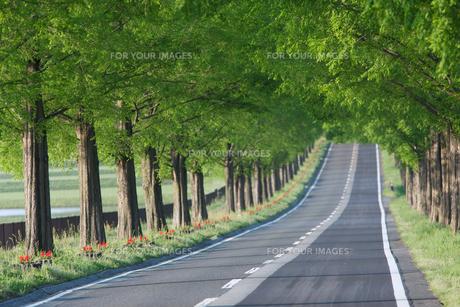 新緑の中のまっすぐな道の素材 [FYI01028667]