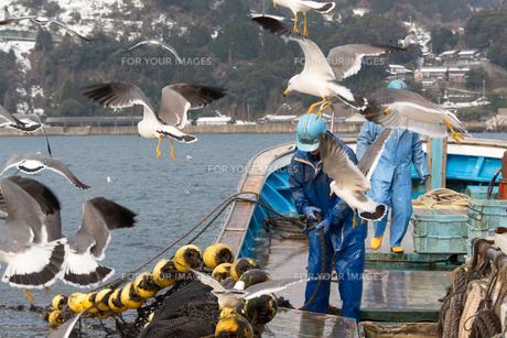 作業する漁師の素材 [FYI01030331]