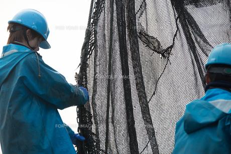 作業する漁師の素材 [FYI01030377]