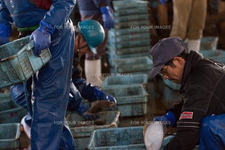 漁師の素材 [FYI01030443]