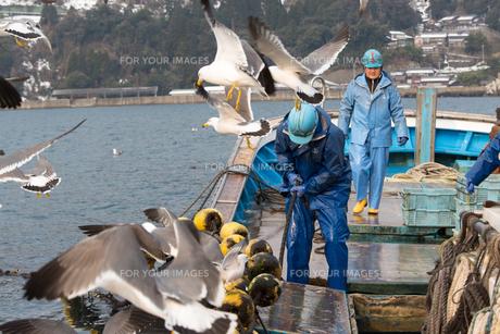 作業する漁師の素材 [FYI01030445]