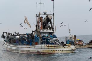 漁師の素材 [FYI01030457]
