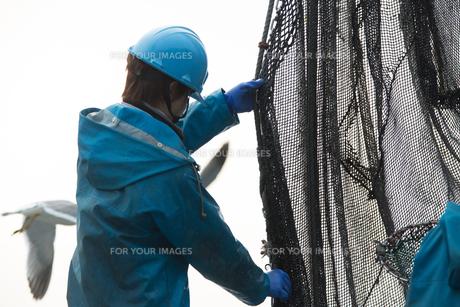 作業する漁師の素材 [FYI01030458]