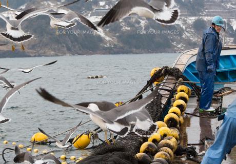 作業する漁師の素材 [FYI01030505]
