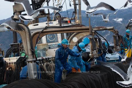 作業する漁師の素材 [FYI01030522]