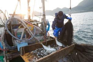 定置網漁の男性の素材 [FYI01030542]