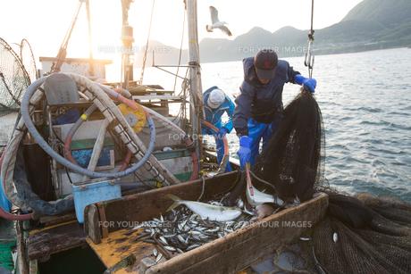 定置網漁の男性の素材 [FYI01030583]