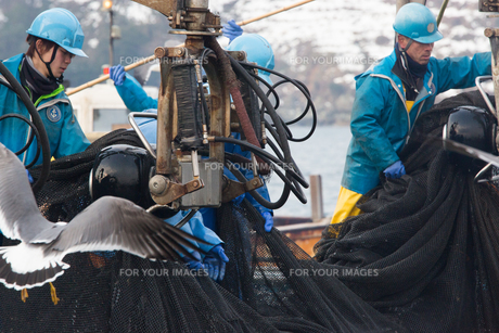 漁師の素材 [FYI01030585]