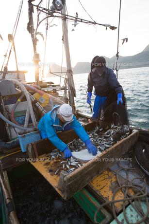 定置網漁の男性の素材 [FYI01030592]