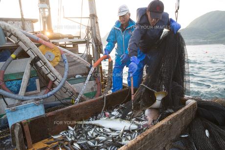 定置網漁の男性の素材 [FYI01030596]