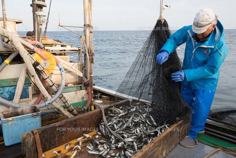 定置網漁の男性の素材 [FYI01030603]