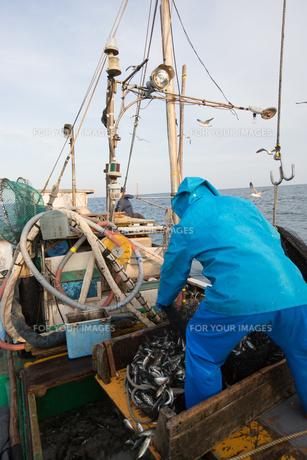 定置網漁の男性の素材 [FYI01030604]