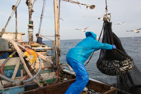 定置網漁の男性の素材 [FYI01030618]