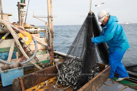 定置網漁の男性の素材 [FYI01030619]