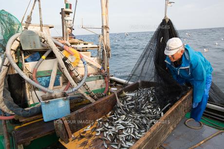 定置網漁の男性の素材 [FYI01030623]