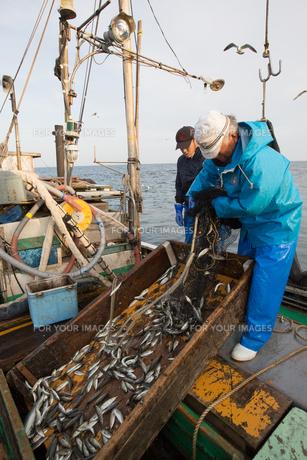 定置網漁の男性の素材 [FYI01030631]