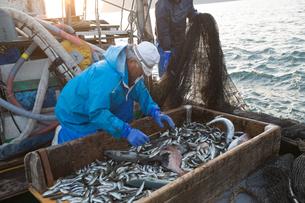 定置網漁の男性の素材 [FYI01030633]