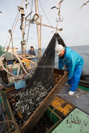 定置網漁の男性の素材 [FYI01030634]