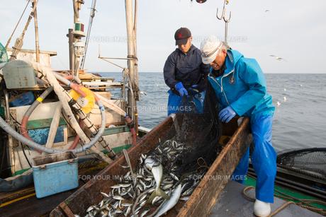 定置網漁の男性の素材 [FYI01030636]
