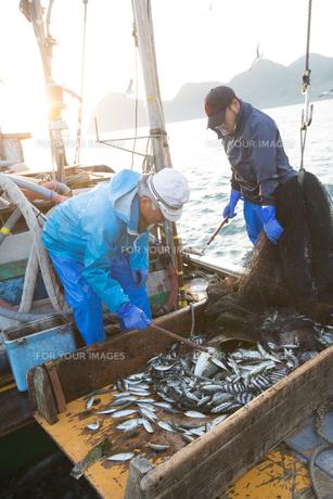 定置網漁の男性の素材 [FYI01030663]