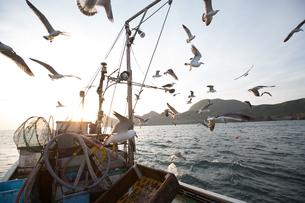 定置網漁の男性の素材 [FYI01030664]