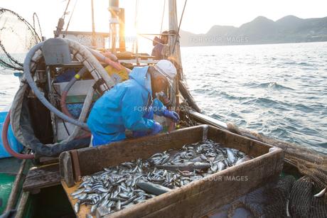定置網漁の男性の素材 [FYI01030672]
