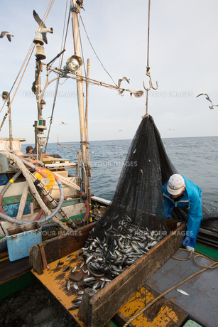 定置網漁の男性の素材 [FYI01030676]