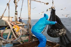 定置網漁の男性の素材 [FYI01030679]